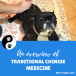 The Caring Vet Approach to Pet Health, an overview of Traditional Chinese Veterinary Medicine