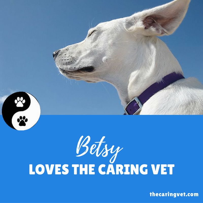betsy loves the caring vet, veterinary acupuncture
