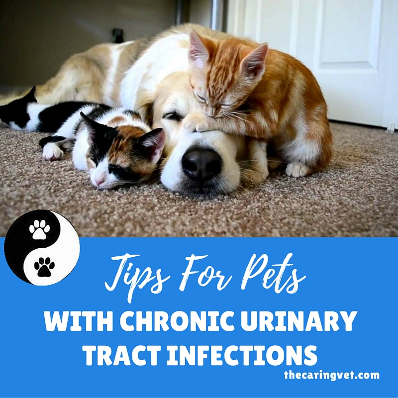pets with UTI