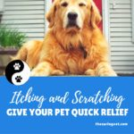 Is Your Pet Scratching & Itching?  Some Simple Tips Will Give Your Pet Quick Relief.