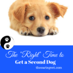 "The ""Right"" Time To Get a Second Dog"