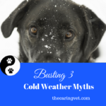 Busting Cold Weather Myths Concerning Your Pet