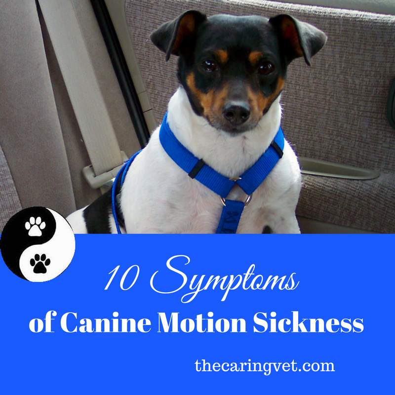 10 Symptoms Of Motion Sickness In Dogs