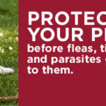 Protect Your Pet Now